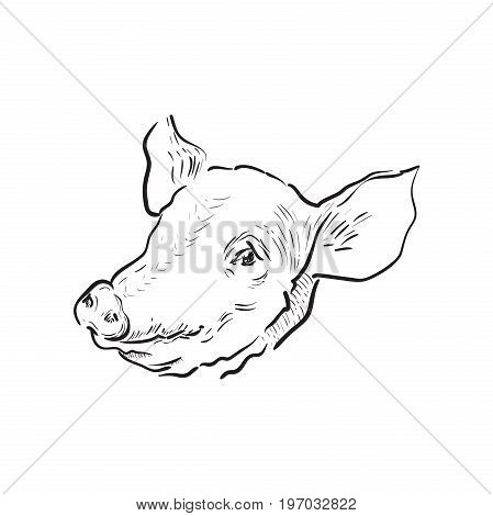 Sketch pig icon. Farm theme. Vector illustration EPS 10