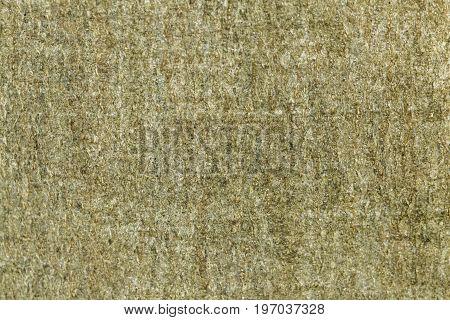 Bark of a European beech Fagus sylvatica. poster