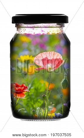 Jar glass with summer picture inside it isolated on white background