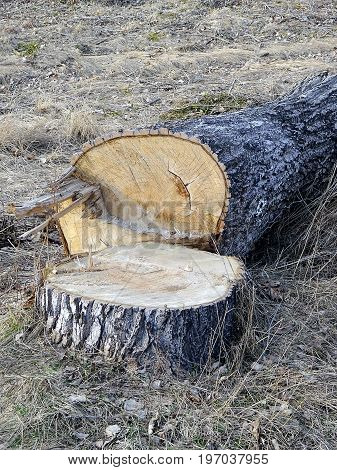 Parts of a sawed tree in the grass
