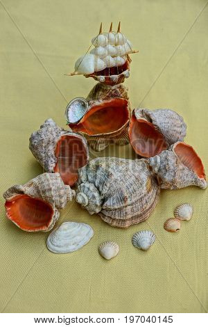Seashells and a small boat on a yellow substance