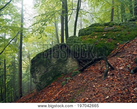 Mysterious Autumn Foggy Colorful Forest With Big Stones Covered Moss And Red Fallen Leaves