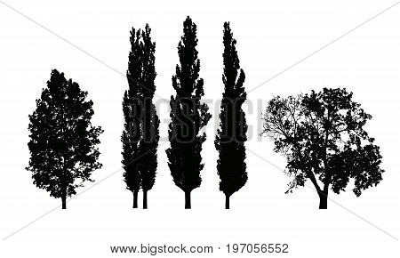 Set of realistic vector silhouettes of deciduous trees isolated on white background