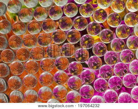Photo image of flowers refracted, and reflected 4