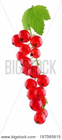 Juicy red currant with light green leaves isolated on a white background. Ripe and raw red berries. Fresh and tasteful currant. Sour berries for vegetarian summer meals. Delicious red currant.