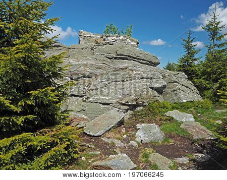 Rock And Stones In Jeseniky Mountain Czech Republic  Spruce Tree Forest
