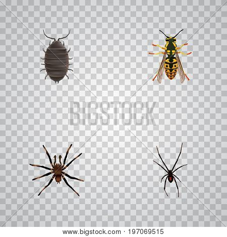 Realistic Spinner, Arachnid, Dor And Other Vector Elements