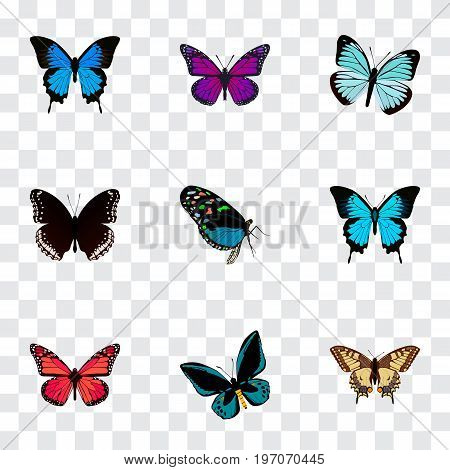 Realistic Papilio Ulysses, Purple Monarch, Common Blue And Other Vector Elements
