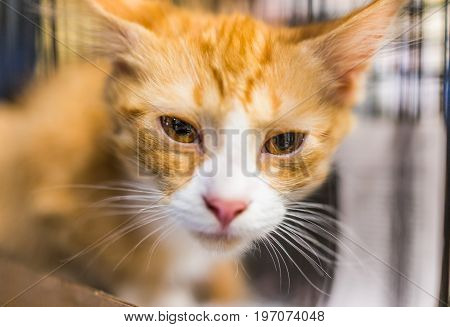 Portrait Of One Sad Orange Ginger Kitten In Cage Waiting For Adoption