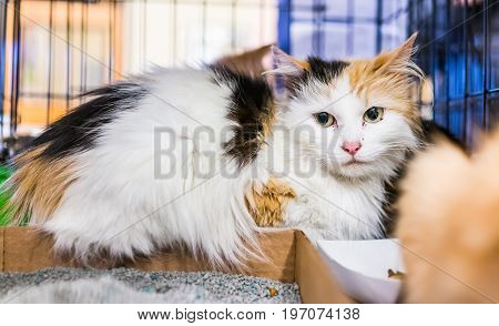 Portrait Of One Sad White Calico Cat In Cage Waiting For Adoption