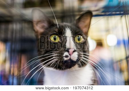 Portrait Of Scared Black And White Cat Face With Green Eyes In Cage Waiting For Adoption