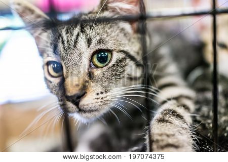 Portrait Of One Tabby Kitten Playing In Cage Waiting For Adoption