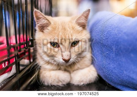 Portrait Of One Sad Pale Orange Ginger Kitten In Cage Waiting For Adoption