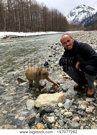 Japanese macaque and tourist in the Kamikochi National Park. Macaques looking for food in the river under the stone