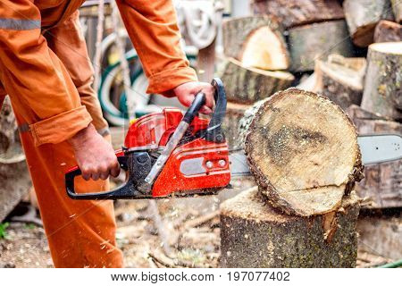 Man with chainsaw cutting the tree. worker in protective gear.