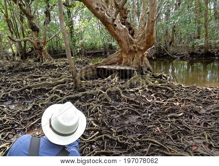 Taking pictures of awesome tree roots in the mangrove forest of Trat Province, Thailand