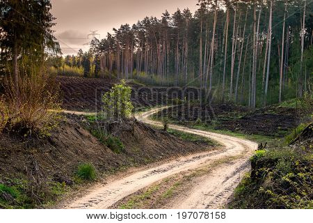 Path winding through the forest cut. Masuria Poland.