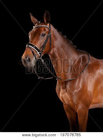 Horse With Bridle And Reins