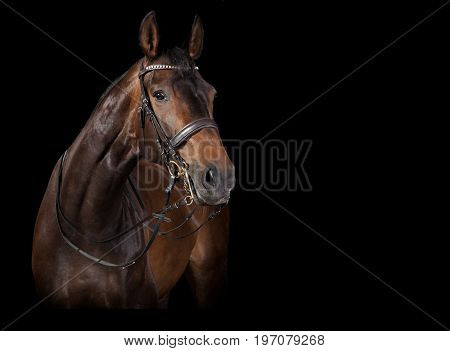 Horse Looks Black Background