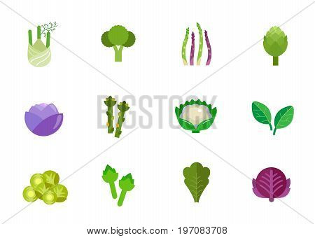 Vegetables icon set. Fennel Broccoli Asparagus stem Artichoke Red cabbage Asparagus Cauliflower Spinach Brussel sprout Artichoke Lettuce Red cabbage head