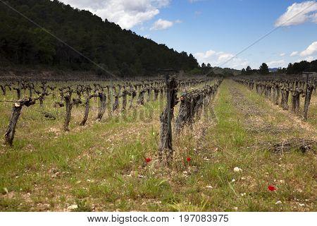 Old Vineyards field in Teruel province. Spain