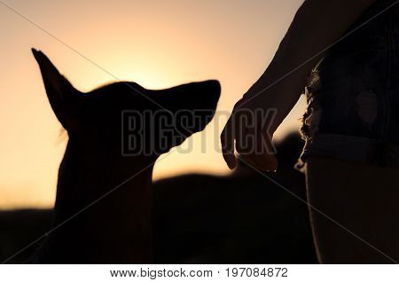 Girl and her dog on a walk silhouetted against the sunsetting sky