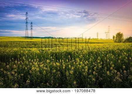 Field covered with rape early morning. power lines on the field. Masuria Poland.