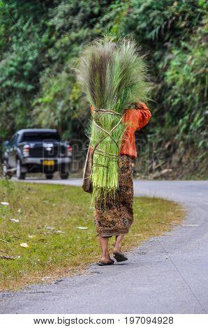 LUANG NAM THA, LAOS - DECEMBER 31, 2012: Woman carrying wood in the village Luang Nam Tha Northern Laos