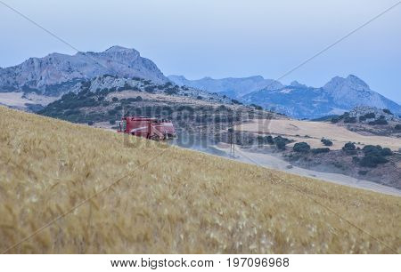 Harvester gathering wheat at mountain range of Antequera Malaga Spain. Combine machine working on sloping ground