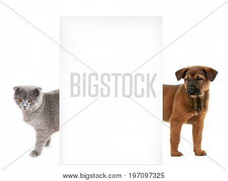 Cat and dog with blank poster on white background