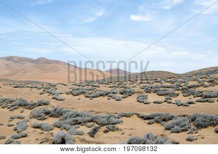 Tillandsia plant - inhabitant of desert - natural background