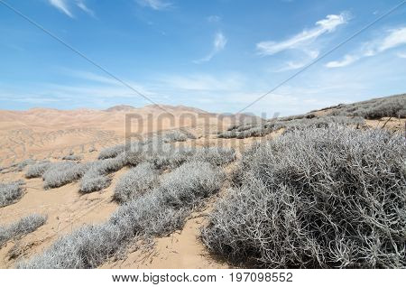 Tillandsia plant in extreme terrain of desert