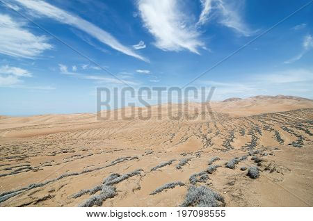 Stunning view to arid lands of a desert and tillandsia plant