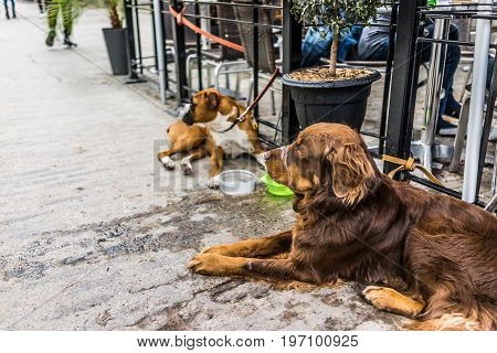 Two Dogs Lying Down By Restaurant With Food Bowls