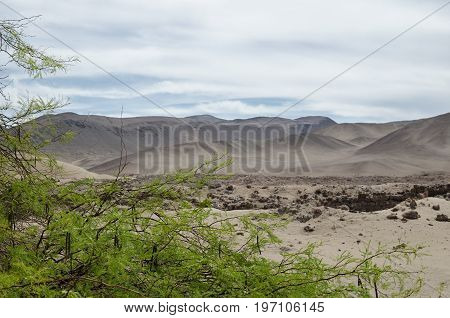 Green tree and desert behind - natural background