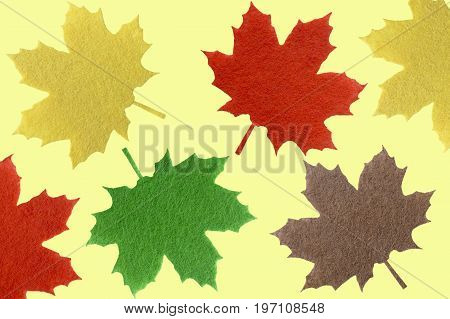 Multi-colored maple leaves on a white background for a background with a place for an inscription a top view. Flat