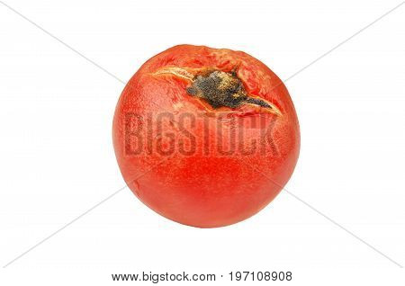 Molded red tomato isolated on white background