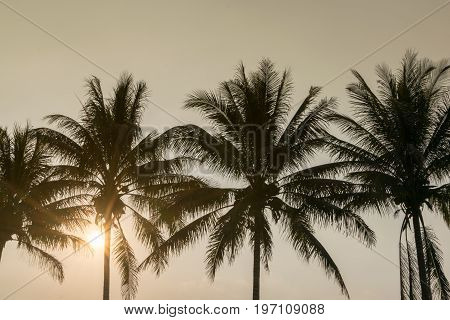 silhouette coconut tree at tropical coast sunset time , summer background concept