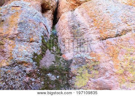 Samples of moss, algae and lichen on volcanic rock. Moses Spring Trail, Pinnacles National Park, California, USA.