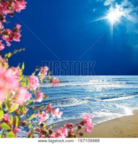 empty golden color sandy beach and flowers over sunny blue sky