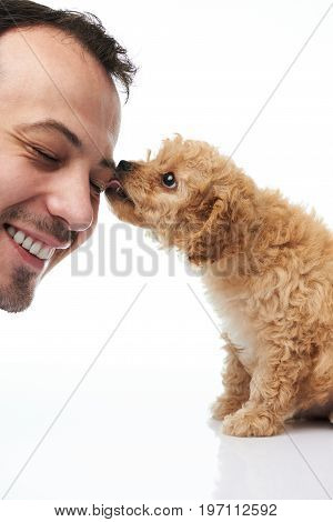 Puppy licking man face isolated on white background. Poodle puppy lick man head
