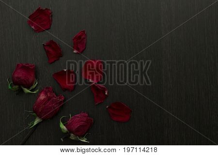 A Withered Red Rose And Petals On Black Background, Copy Space.