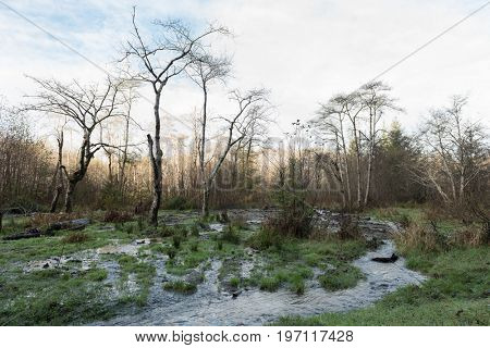 A stream of water and bare trees near Fern Canyon, Humboldt County, California, USA in December.