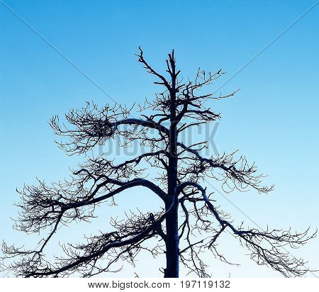 Lonely deadwood tree against the blue sky