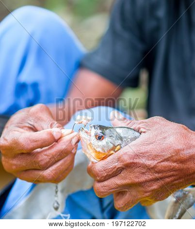 View on local man shows piranha fished in Brazil