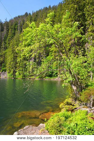 Black lake is the largest lake in the National park Sumava, Czech Republic.