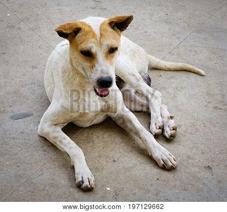 A Dog On Rural Road