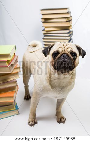 Funny Dog On The Background Of Books