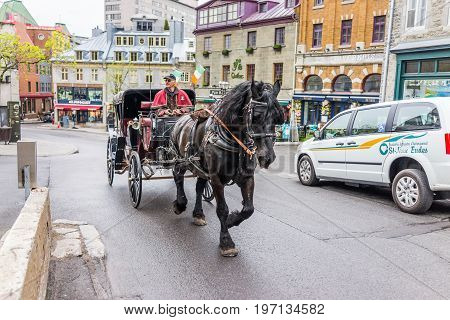 Quebec City, Canada - May 39, 2017: Closeup Of Horse Carriage Buggy With Tour Guide Going Up Hill In