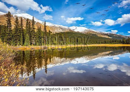 Flock of birds is reflected  in smooth water of the lake.Rocky Mountains on a sunny autumn day. The concept of active tourism and ecotourism